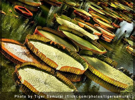 Pamplemousse Gardens, Mauritius - Photo by Tiger Samurai (flickr.com/photos/tigersamurai/)